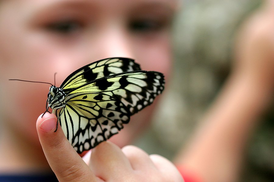 Broken, Beautiful Butterfly